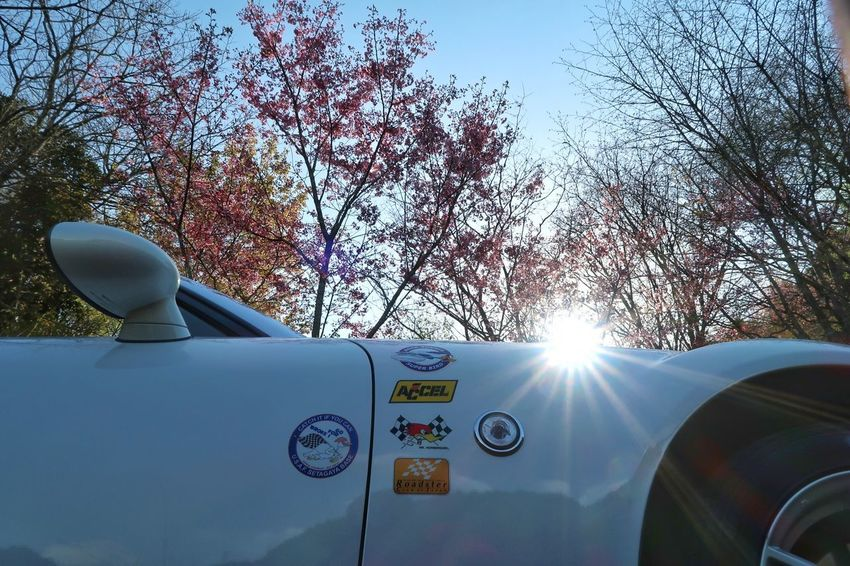 Car Sunlight Day Sky Tree Beauty In Nature Wildflower 桜 Cherry Blossom Cherry Blossom 空 Mazda Mx5 Miata マツダ ロードスター Springtime Transportation Spring Flowers Windingroad Pink Color 春 Road サクラ