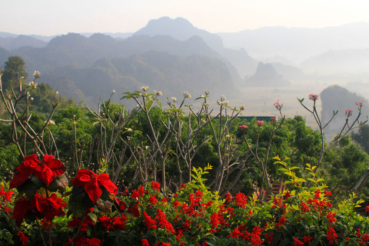 Close-up of red flowering plants against mountains