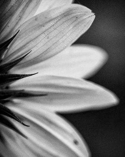 Hello Spring Macro Mode : ON Nikon D7200 Nikonphotography Indiaphotography India Photography Iamexclusive Iamnikon Iamshutterbug Nikkor 105mm Closeup Pushpamverma Flower