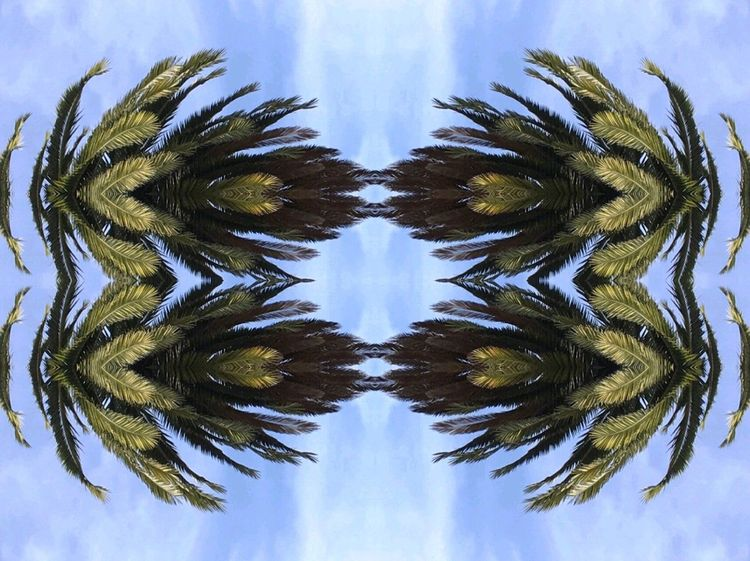 Palm frame Déco Art Sky No People Nature Outdoors Beauty In Nature Day Pattern Border Frame Mirror Mirrored Branches Frond VSCO Frame It! Tranquility Symmetry Symmetrical Big Tree Aesthetic Backgrounds Blue Palm Tree Break The Mold Cut And Paste EyeEmNewHere