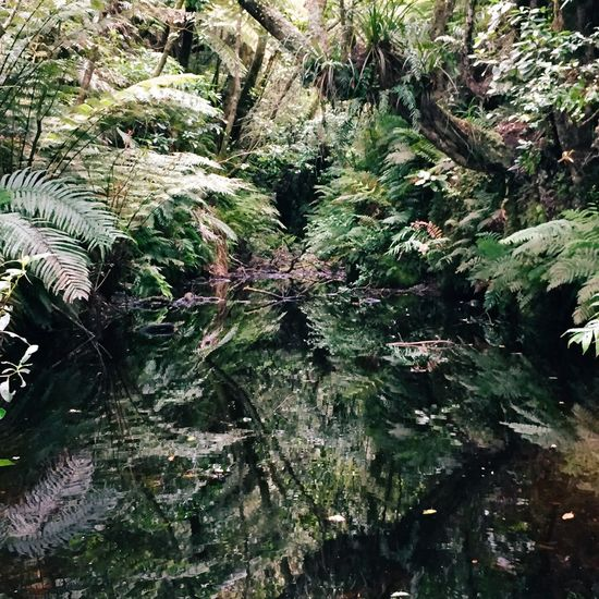 reflection of jungle plants on a water surface Beauty In Nature Branch Close-up Day Full Frame Green Green Green Color Growth Jungle Lake Taupo Lush Foliage Nature New Zealand Non-urban Scene Outdoors Plant Plants Reflection Scenics Taupo Tranquil Scene Tranquility Tree Water