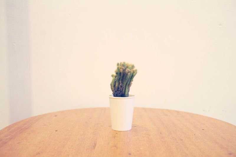 Cactus on the table Nature Cactus EyeEm Selects Plant Potted Plant Nature Growth Indoors  No People Table Flower Wall - Building Feature Freshness Flowering Plant Vase Still Life Copy Space Food And Drink Flower Pot Close-up Houseplant Decoration Flower Arrangement