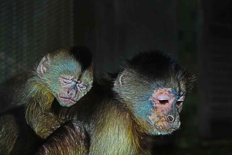 Close-Up Portrait Of Monkeys