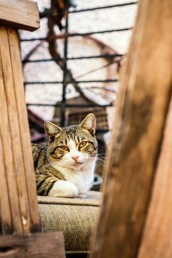 Sweet cat looking at camera framed between woods