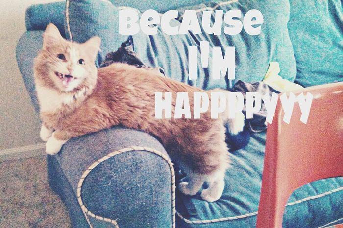 I Smile Because Im Happy Happyhappyhappy Meow