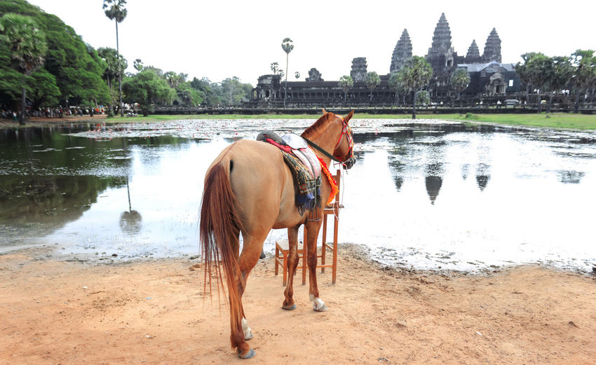 Full length of horse standing by pond at angkor wat temple