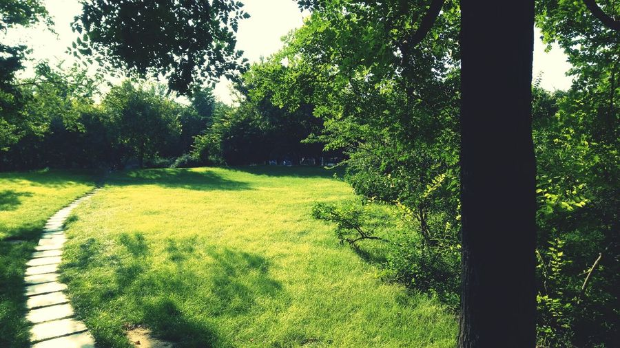 Tree Growth Nature Green Color Outdoors Day Grass No People Beauty In Nature Park - Man Made Space Tranquility Sky Water
