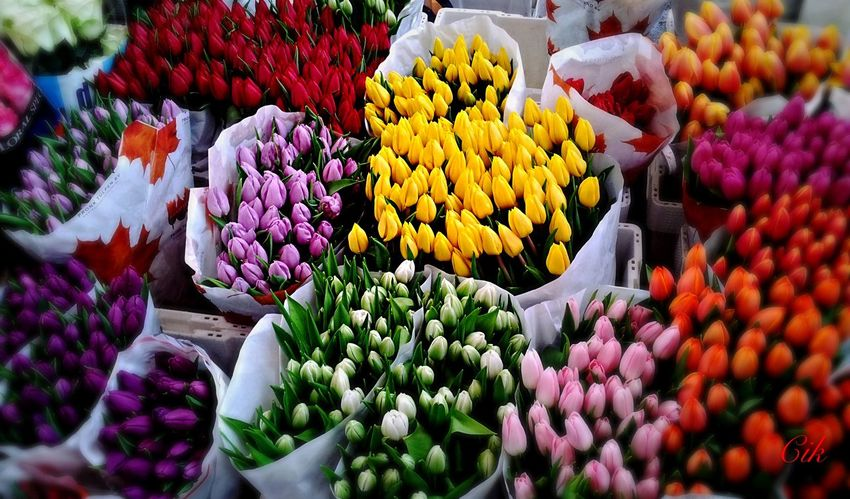 Traveling Austria Vienna Nashmarkt Flowers Colors From My Point Of View Tadaa Community Colorful