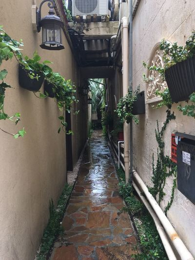Alley -