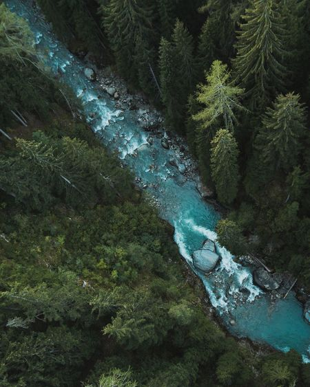 High angle view of river in forest