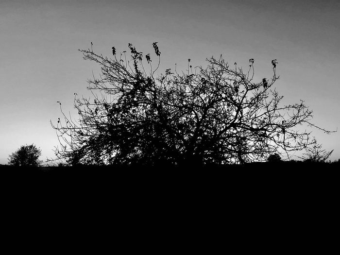 Tree Silhouette Tree Black And White Bianco E Nero Biancoenero EyeEmNewHere EyeEm Nature Lover Black & White Black And White Blackandwhite Albero Tree_collection  Trees And Sky Trees Tree Sky Silhouette Tree Plant Low Angle View Nature EyeEmNewHere EyeEmNewHere Autumn Mood EyeEmNewHere