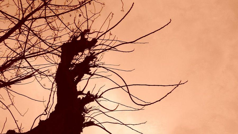 Tangled Tree Of