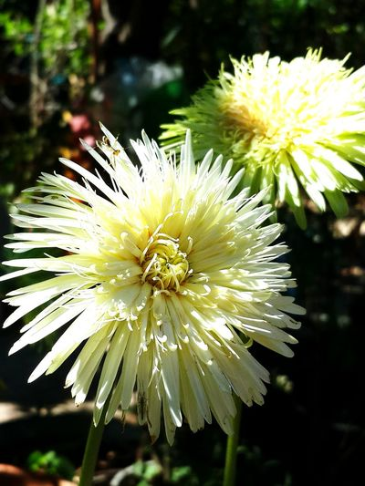 Flower Nature Growth Beauty In Nature Fragility Flower Head Freshness Close-up Plant Outdoors No People Day Passion Flower Wallpaper Flowers Frower White Plant Nature