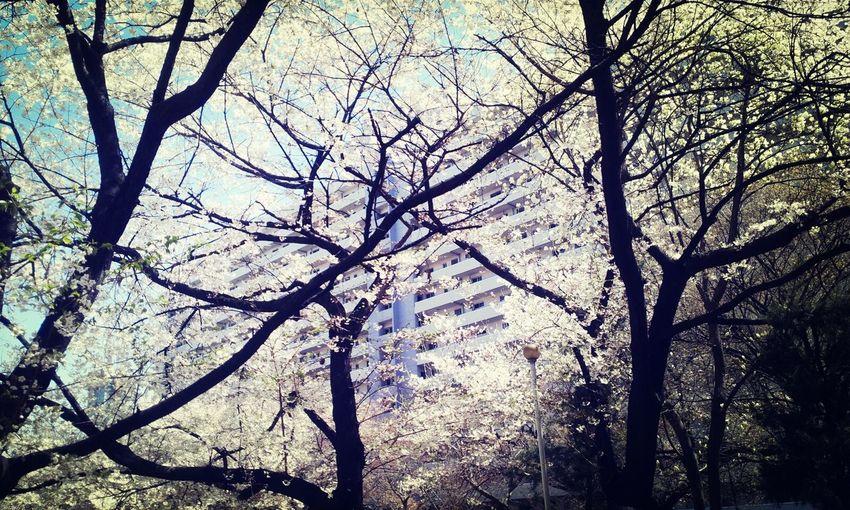 봄에 찍은 사진 지금 올리네
