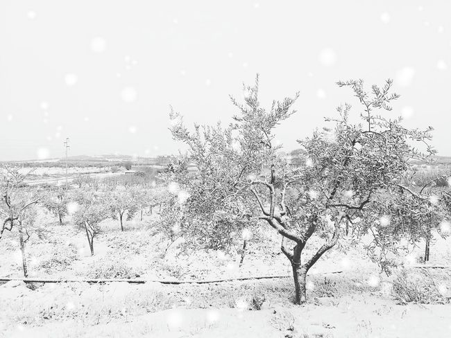 Close-up Drop Nature Water No People Sky Beauty In Nature Spider Web PixelatedDay Outdoors Freshness Tranquility Rural Scene Winter Snow ❄ Ice Winterscapes Puglia Olive Tree Olive Oil