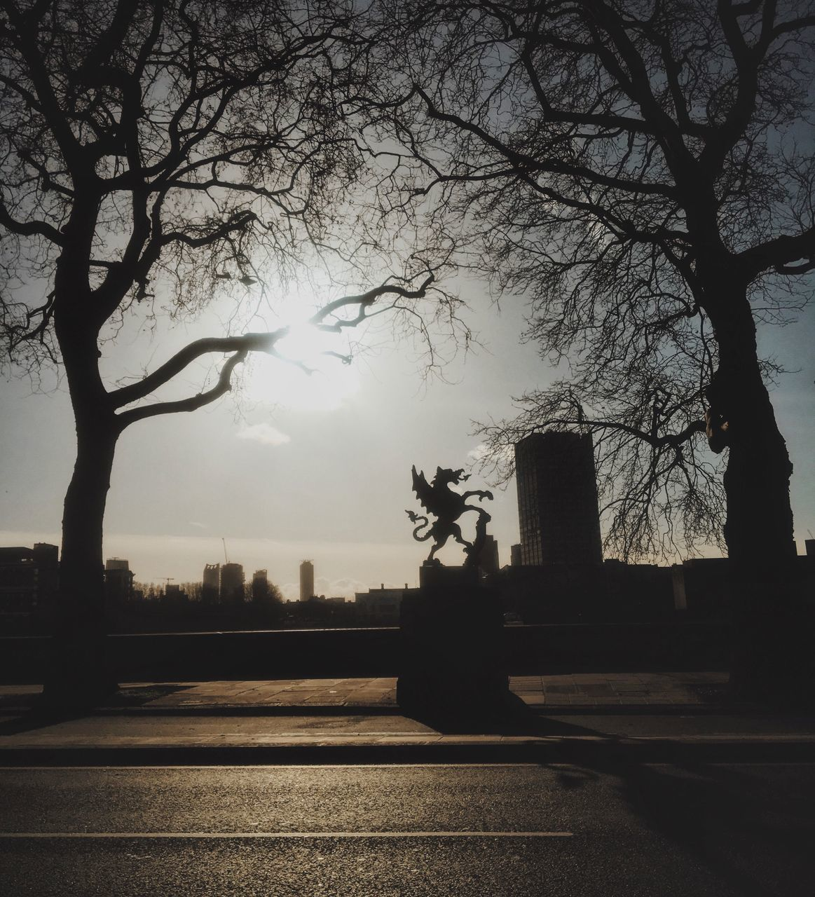 SILHOUETTE OF TREES AND BUILDING