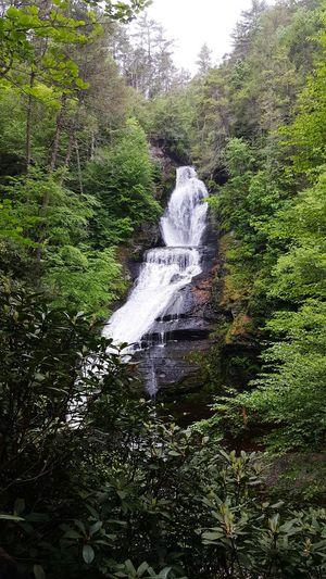 Nature Beauty In Nature Tree Waterfall EyeEmNewHere EyeEmNewHere