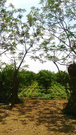 Nature Nature Farm Farmers Egypt Landscape Trees Nature_collection Natural Agriculture Nature Photography Green Fields Green Field Greenfield Greenfields