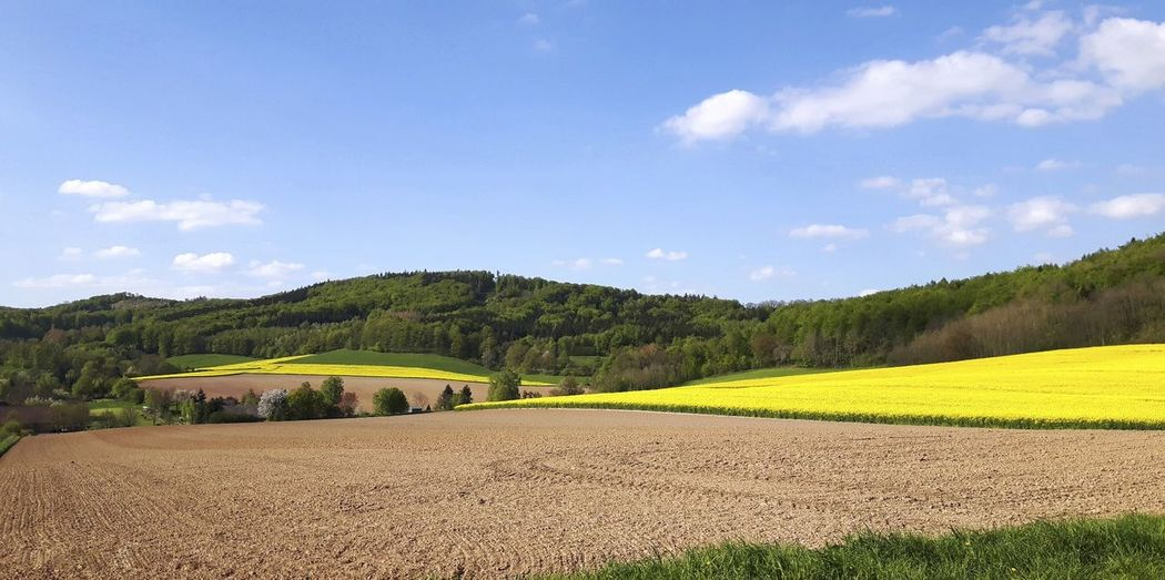 Weserbergland II. Weserbergland Landscapephotography EyeEmNewHere Nature Germany Niedersachsen Landscape Lower Saxony Tree Rural Scene Agriculture Field Sky Landscape Cloud - Sky Cultivated Land