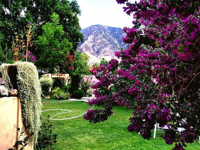 Flower Tree Chitral KPK PAKISTAN EyeEmNewHere
