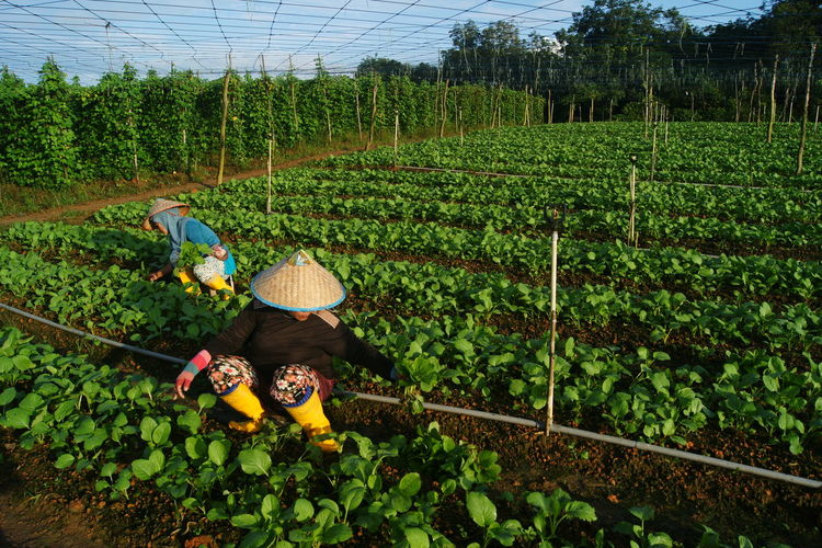 Rear view of men working in farm