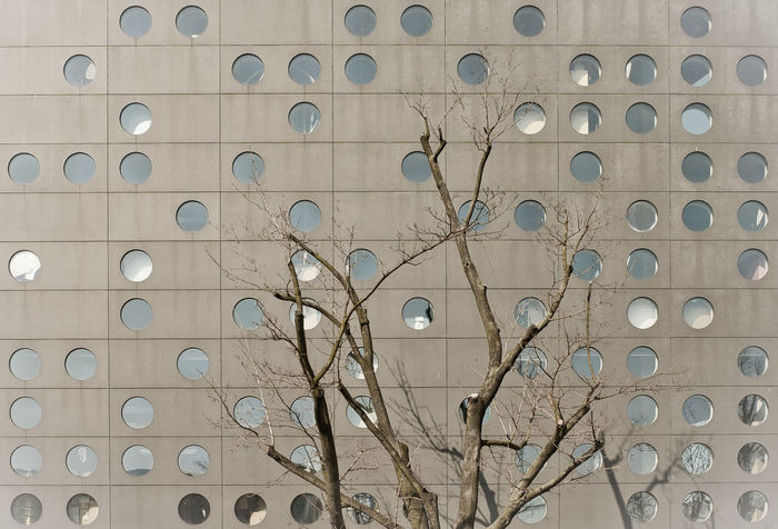 Architecture Building Building Exterior Built Structure No People Outdoors Tree Wall - Building Feature