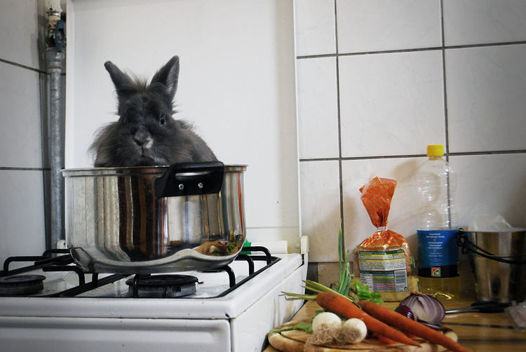 Rabbit in utensil on stovetop