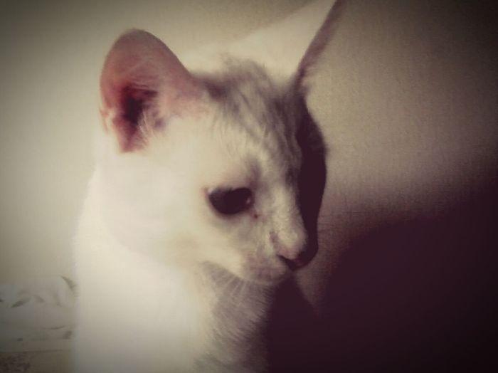 ericos my cat