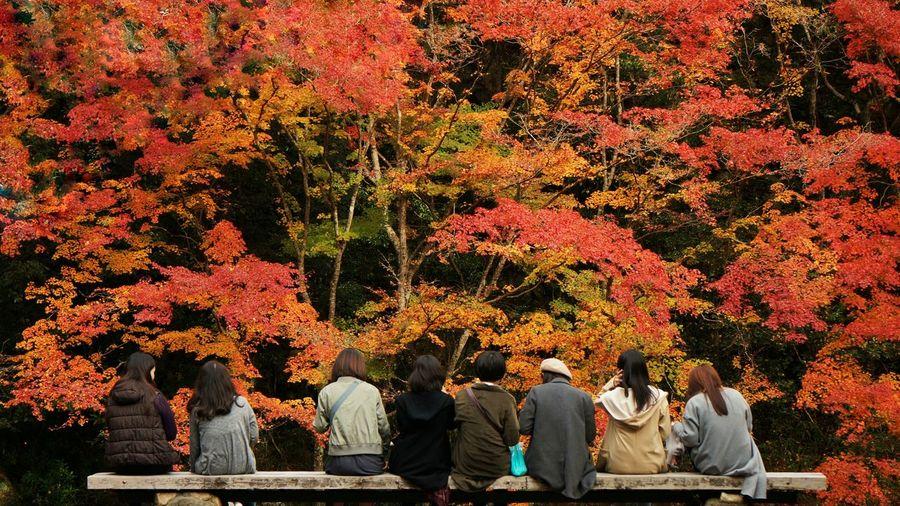 Good bye Autumn Autumn Autumn Leaves Autumn Collection Autumn Colors Tree Momiji Autumn Trees Japan Japan Scenery Japan Photography