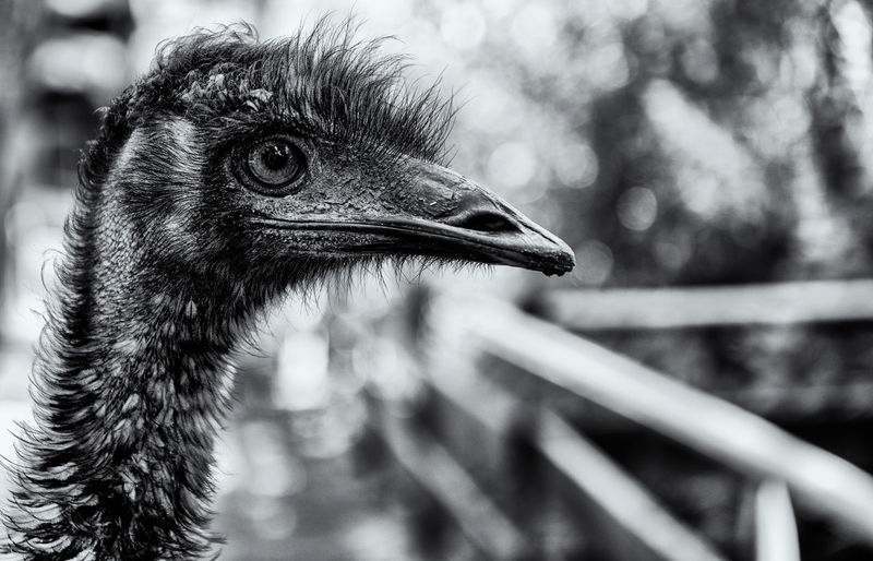 Call me Raptor Animal Bird Animal Themes One Animal Vertebrate Focus On Foreground Animal Wildlife Animals In The Wild Close-up Ostrich No People Animal Body Part Day Beak Animal Head  Looking Away Looking Nature Outdoors Side View Animal Neck Profile View Animal Eye