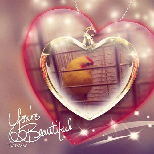 limonun tatlığına bakın (2.kuşum) First Eyeem Photo