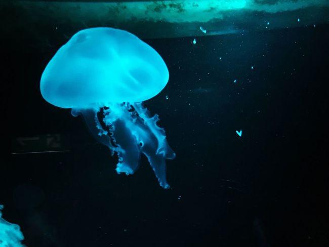 Qualle Jellyfish Sealife