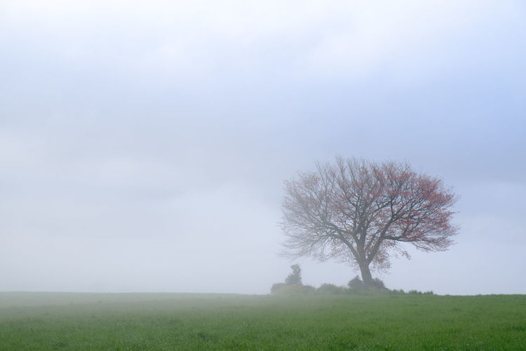 Scenic view of grassy landscape against sky in foggy weather