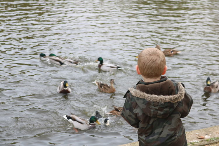 Innocent Childhood Animal Themes Animal Wildlife Animals In The Wild Bird Child Childhood Day Duck Pond Feeding Ducks Lake Nature One Animal One Person Outdoors Outdoors Photograpghy  Park People Real People Rear View Swan Swimming Water