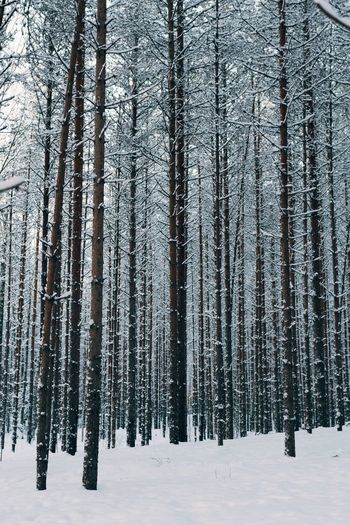 Winter Cold Temperature Snow Tree Plant Land Forest No People Scenics - Nature Day Nature Landscape Beauty In Nature My Best Photo