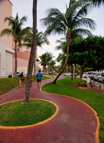 Footpath with palm trees between resort, Boulevard Kukulcan, Zona Hotelera, Cancún, Mexico, in September 8, 2018 Cancun Mexico Architecture Building Exterior Carribean City Coconut Palm Tree Day Footpath Grass Group Of People Growth Incidental People Lifestyles Nature Outdoors Palm Tree Park Plant Real People Sky Tree Tree Trunk Tropical Climate Trunk