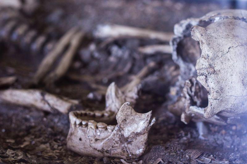 EyeEmNewHere Another Mummy Close-up Skull