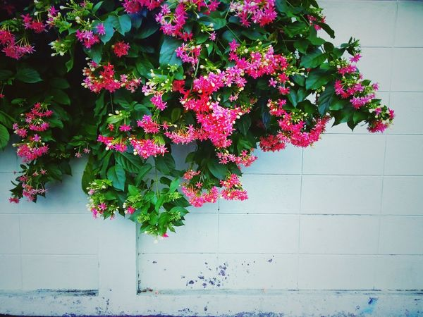 Beauty Of Flower Flower And Wall Flower Photography Flower Collection Flower