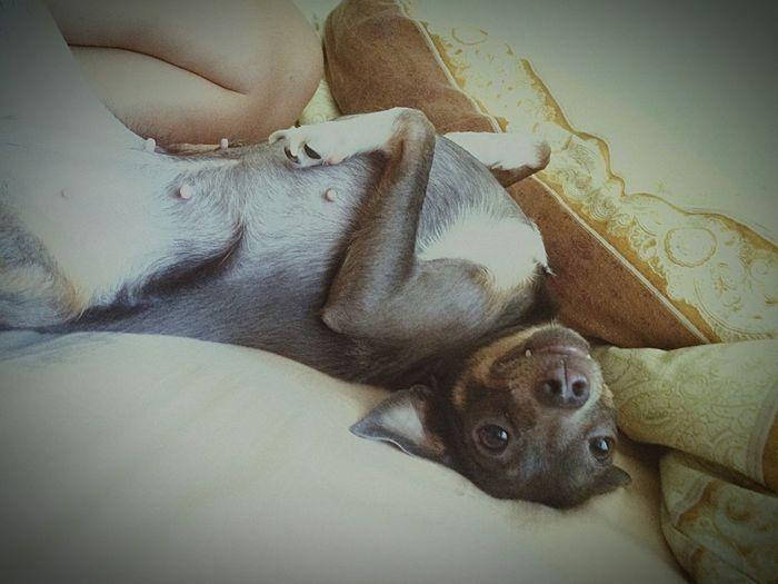Littlefriend Enjoying Life Relaxing