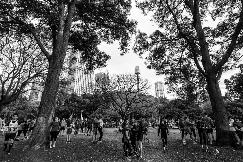 City2Surf Light And Shadow Monochrome Black And White Tree Plant Crowd Group Of People Real People Large Group Of People Nature Day Men Women Outdoors Leisure Activity Adult Lifestyles Festival Sky