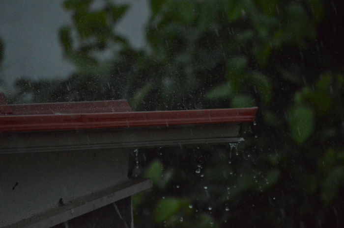 Close-up Nature No People Outdoors Rain Summer Rain Tree Weather