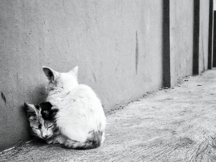 Cold Cat. EyeEm Jakarta Instastreetid Lembang Streetview Maklumfoto INDONESIA