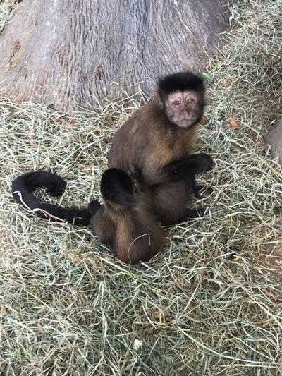 Mommaandbaby Monkeys Mammal Animal Wildlife Animal Themes Young Animal Sitting First Eyeem Photo