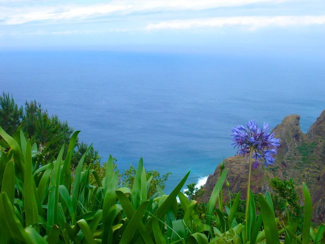 Agapanthus Madeira Island Madeira Island Portugal Agapanthus Flower Beauty In Nature Blue Sea And Blue Sky Day Flower Freshness Growth High Angle View High Up In The Mountains Horizon Over Water Nature No People Outdoors Plant Scenics Sea Sky Tranquil Scene Tranquility Water