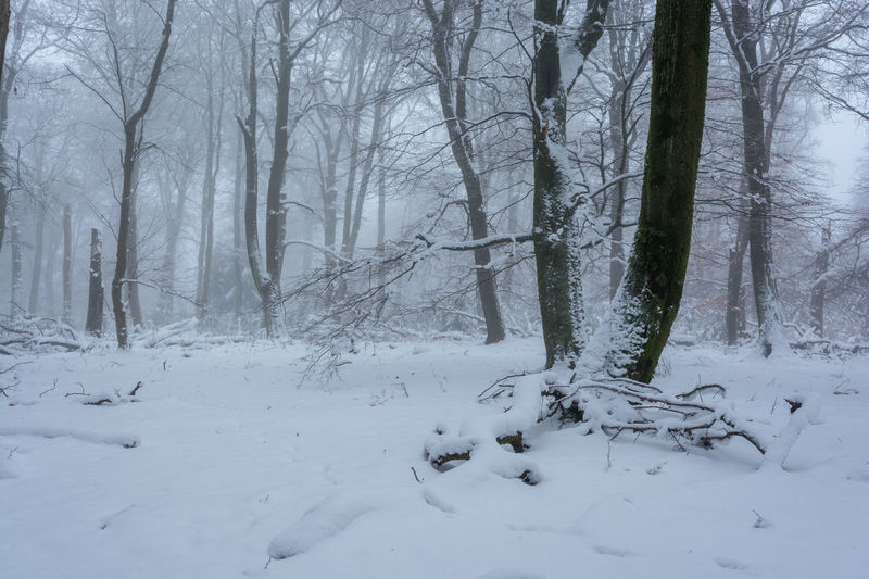 Winter im Nationalpark Hunsrück-Hochwald Bare Tree Beauty In Nature Cold Temperature Day Forest Hunsrück Landscape Nature No People Outdoors Scenics Snow Tranquil Scene Tranquility Tree Winter