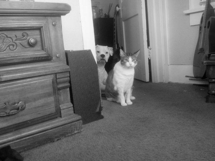Popart Kunst FUNNY ANIMALS Cat Blackandwhite