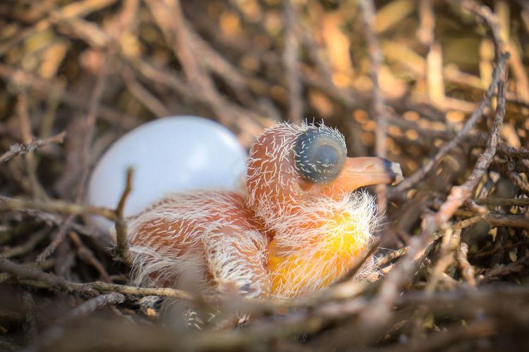 animal nest