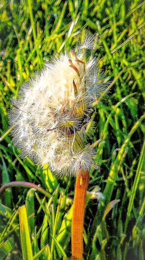 Memories of a summer... Wish it never ends !🍂🌾🍁🌷🌹 At The Park Dandeliongreens EyeEm Nature Lover Free Open Edit Sunshine ☀ Enjoying Nature Nature By My Side Green Grass Summer2015