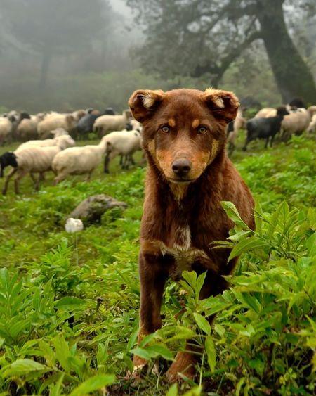Dogy Mammal