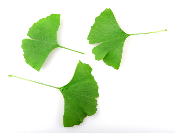 Ginkgo biloba Ginkgo Ginkgo Biloba Ginkgo Leaves Isolated Biloba Close-up Freshness Gingko Gingko Tree Ginkgo Leaf Ginkgo Tree Ginko Ginko Biloba Ginko Leaf Ginko Leaves Ginko Tree Ginkobiloba Green Color Isolated On White Isolated White Background Leaf Maidenhair Tree No People Studio Shot White Background